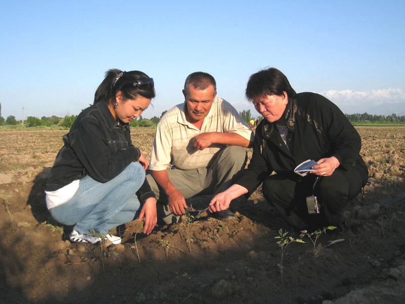 Specialists of Kyrgyz National Agrarian University on farmer's field